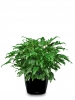 Get Wide Range of Stunning Indoor Plants in Melbourne For your Business and Home